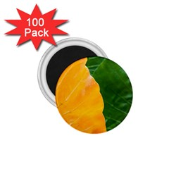 Wet Yellow And Green Leaves Abstract Pattern 1 75  Magnets (100 Pack)