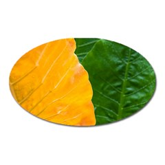 Wet Yellow And Green Leaves Abstract Pattern Oval Magnet