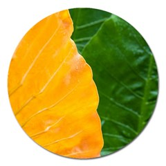 Wet Yellow And Green Leaves Abstract Pattern Magnet 5  (round)