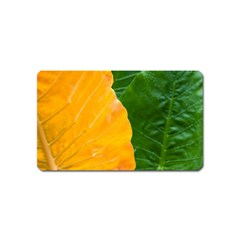 Wet Yellow And Green Leaves Abstract Pattern Magnet (name Card)