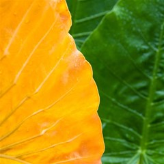 Wet Yellow And Green Leaves Abstract Pattern Magic Photo Cubes