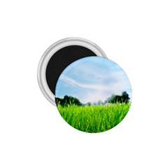 Green Landscape Green Grass Close Up Blue Sky And White Clouds 1 75  Magnets