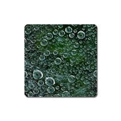 Morning Dew Square Magnet