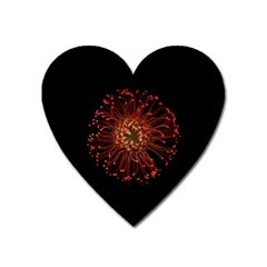 Red Flower Blooming In The Dark Heart Magnet