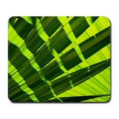 Frond Leaves Tropical Nature Plant Large Mousepads