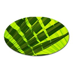 Frond Leaves Tropical Nature Plant Oval Magnet