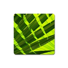 Frond Leaves Tropical Nature Plant Square Magnet