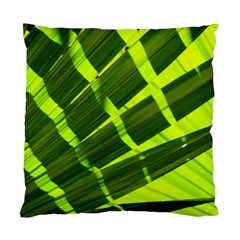 Frond Leaves Tropical Nature Plant Standard Cushion Case (two Sides)