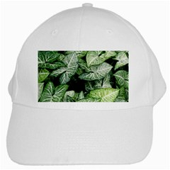 Green Leaves Nature Pattern Plant White Cap