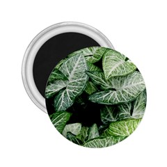 Green Leaves Nature Pattern Plant 2 25  Magnets