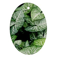Green Leaves Nature Pattern Plant Ornament (Oval)