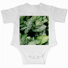 Green Leaves Nature Pattern Plant Infant Creepers