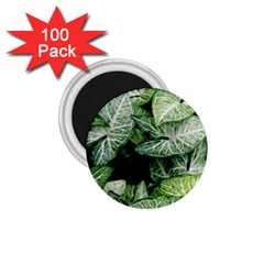 Green Leaves Nature Pattern Plant 1 75  Magnets (100 Pack)