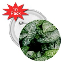 Green Leaves Nature Pattern Plant 2 25  Buttons (10 Pack)