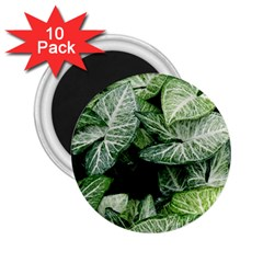 Green Leaves Nature Pattern Plant 2 25  Magnets (10 Pack)