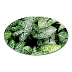 Green Leaves Nature Pattern Plant Oval Magnet