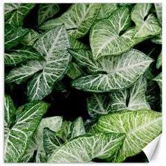 Green Leaves Nature Pattern Plant Canvas 20  X 20