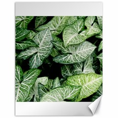 Green Leaves Nature Pattern Plant Canvas 18  X 24