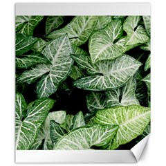 Green Leaves Nature Pattern Plant Canvas 20  x 24