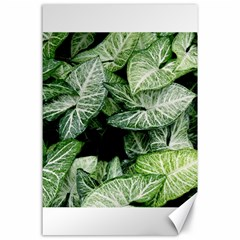 Green Leaves Nature Pattern Plant Canvas 24  X 36