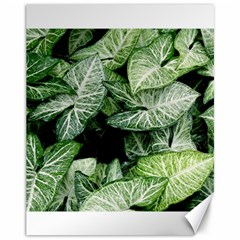 Green Leaves Nature Pattern Plant Canvas 11  X 14