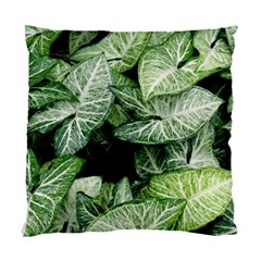 Green Leaves Nature Pattern Plant Standard Cushion Case (one Side)