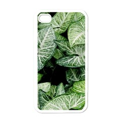 Green Leaves Nature Pattern Plant Apple Iphone 4 Case (white)