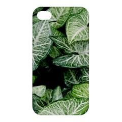 Green Leaves Nature Pattern Plant Apple Iphone 4/4s Premium Hardshell Case