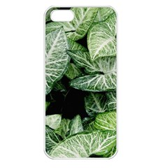 Green Leaves Nature Pattern Plant Apple Iphone 5 Seamless Case (white)