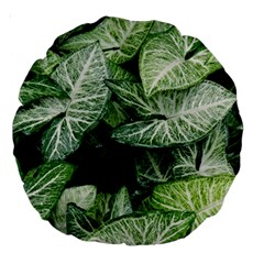 Green Leaves Nature Pattern Plant Large 18  Premium Round Cushions