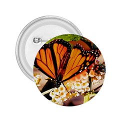 Monarch Butterfly Nature Orange 2 25  Buttons