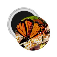 Monarch Butterfly Nature Orange 2 25  Magnets
