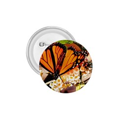Monarch Butterfly Nature Orange 1.75  Buttons
