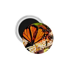 Monarch Butterfly Nature Orange 1 75  Magnets