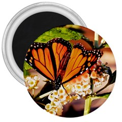 Monarch Butterfly Nature Orange 3  Magnets