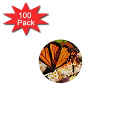 Monarch Butterfly Nature Orange 1  Mini Magnets (100 Pack)