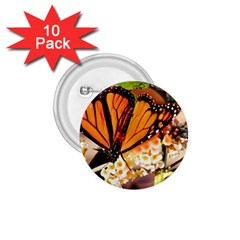 Monarch Butterfly Nature Orange 1 75  Buttons (10 Pack)