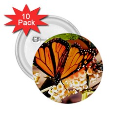 Monarch Butterfly Nature Orange 2 25  Buttons (10 Pack)