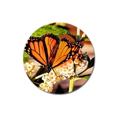 Monarch Butterfly Nature Orange Magnet 3  (round)