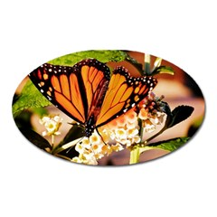 Monarch Butterfly Nature Orange Oval Magnet