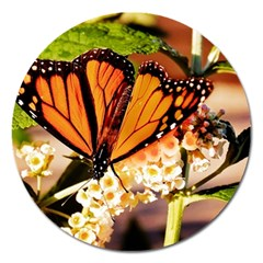 Monarch Butterfly Nature Orange Magnet 5  (Round)