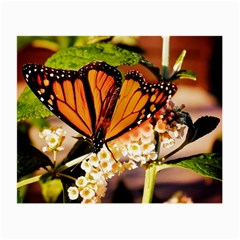 Monarch Butterfly Nature Orange Small Glasses Cloth