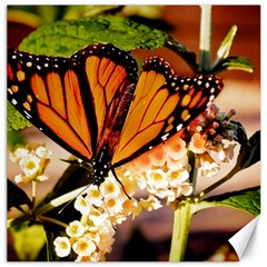 Monarch Butterfly Nature Orange Canvas 20  X 20