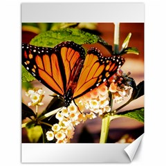 Monarch Butterfly Nature Orange Canvas 18  X 24