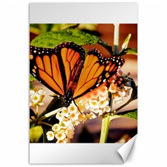 Monarch Butterfly Nature Orange Canvas 24  X 36