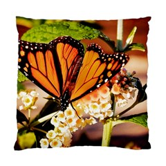 Monarch Butterfly Nature Orange Standard Cushion Case (one Side)