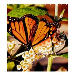 Monarch Butterfly Nature Orange Shower Curtain 66  X 72  (large)