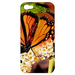 Monarch Butterfly Nature Orange Apple Iphone 5 Hardshell Case