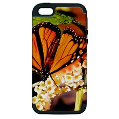 Monarch Butterfly Nature Orange Apple Iphone 5 Hardshell Case (pc+silicone)