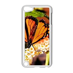 Monarch Butterfly Nature Orange Apple Ipod Touch 5 Case (white)